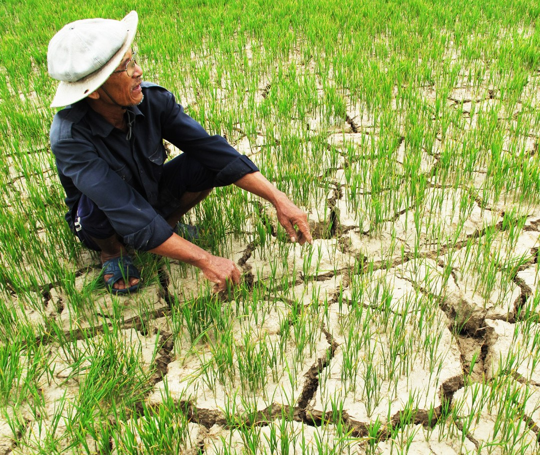 """FAO's project on """"Water scarcity policy assessment for Vietnam"""""""